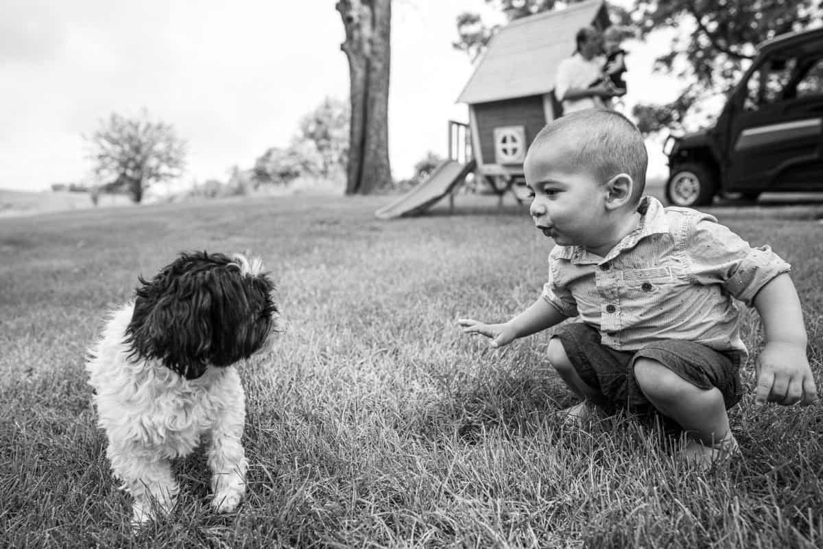 Family Photography Madison WI Boy With Dog