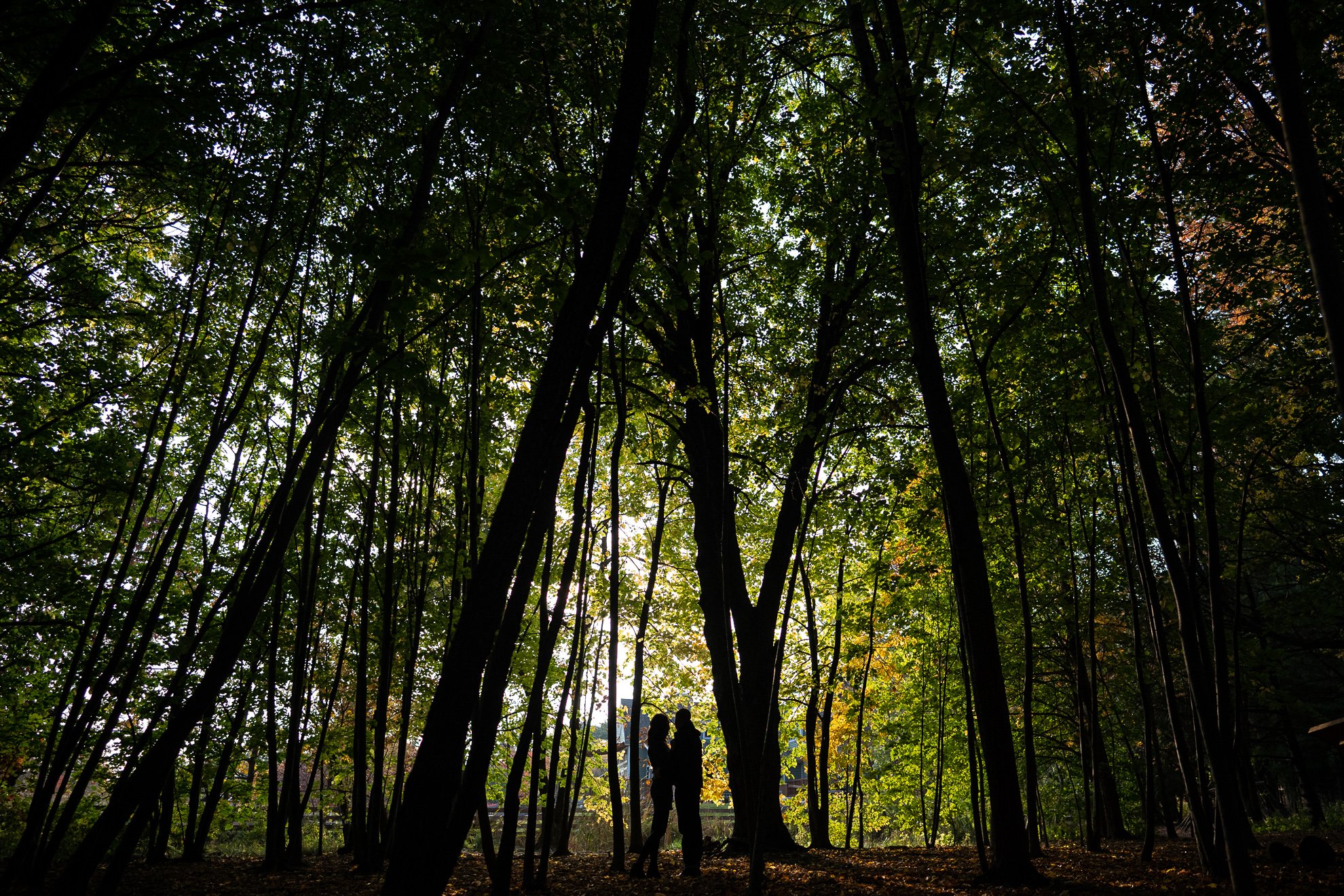Couples Silhouette Aldo Leopold Woods